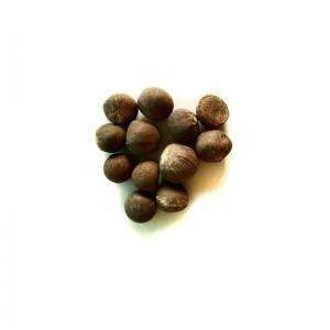 Semi di Pianta del Tè Verde (Camellia sinensis)