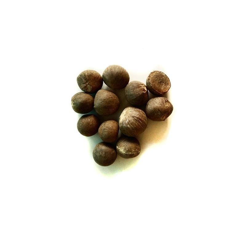 vendita online semi di pianta del t verde camellia sinensis