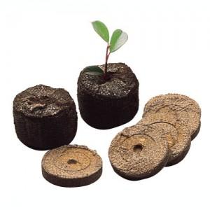 Vendita semi online di piante rare - Semi Rari