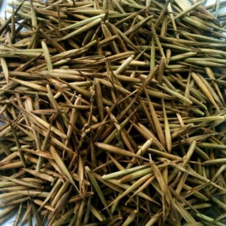 Vendita online semi di Bambù Moso (Phyllostachis edulis)