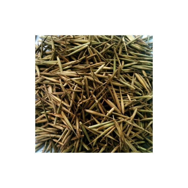 Vendita online semi di bamb moso phyllostachis edulis for Vendita piante bambu gigante
