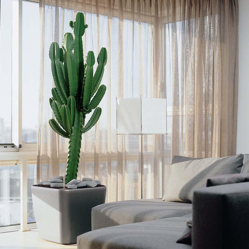 Vaso quadro lechuza vendita online spedizione gratuita - Bambu in vaso acqua ...