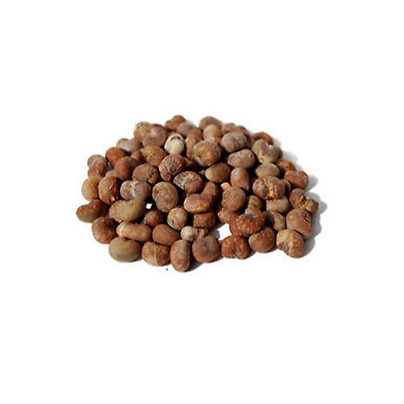 vendita online semi di baobab adansonia digitata
