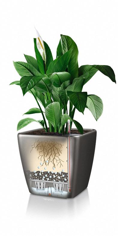 vaso quadro lechuza vendita online spedizione gratuita