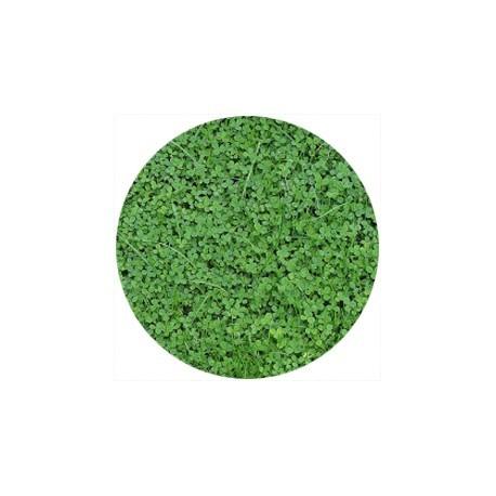 Semi di Trifoglio Nanissimo Tappezzante - confezione risparmio gr 500