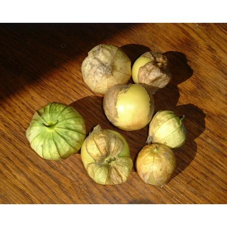 Semi di Tomatillo (Physalis philadelphica)