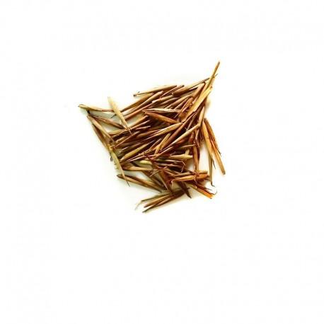 Semi di Bambù Moso (Phyllostachis edulis)